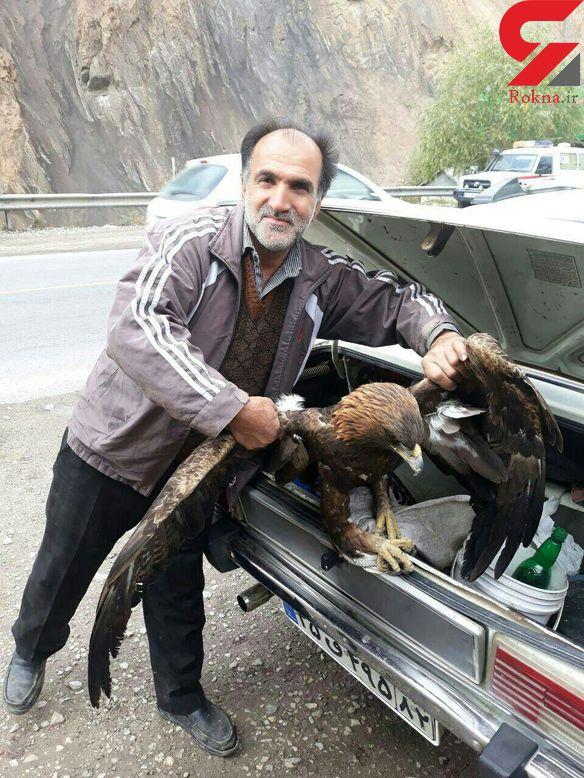مرد آملی با یک عقاب چه کرد؟! + عکس
