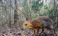 کشف یک جانور عجیب منقرض شده+عکس