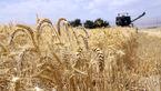 کسانی که بیکیفیتی گندم را مطرح میکنند دنبال واردات هستند