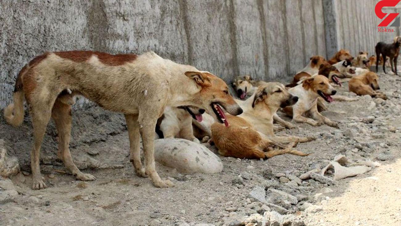 فیلم / مرزن آباد بدترین مکان برای سگ ها / شهرداری سگ آزاری می کند
