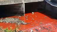 رودخانه به رنگ خون در فیلیپین + فیلم