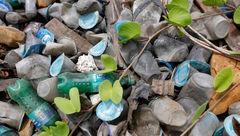 زنبور استرالیایی زباله های پلاستیکی را منسوخ می کنند