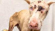 صحنه دردناک از شکنجه یک سگ توسط صاحبش + فیلم / امریکا