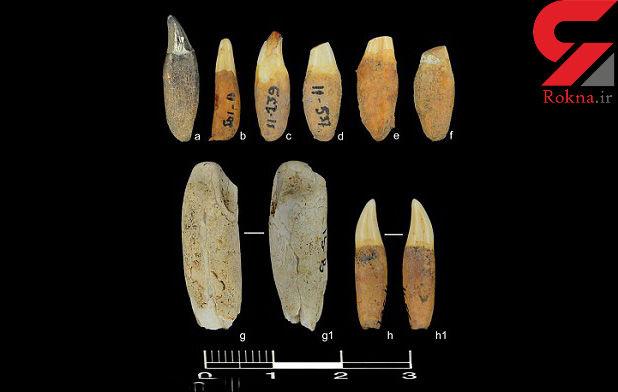 کشف دلفینهای 6 هزار ساله