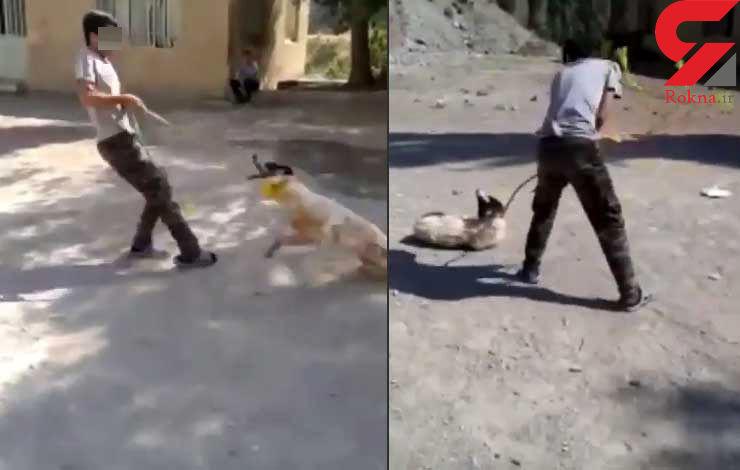صحنه تکاندهنده دار زدن یک سگ توسط پسر خشن / 10 میلیون جایزه برای معرفی این پسر تعیین شد + فیلم و عکس