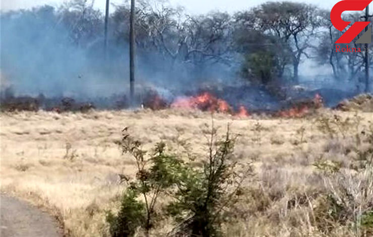 ۲۵۰۰ هکتار از جنگلهای هاوایی در آتش سوخت