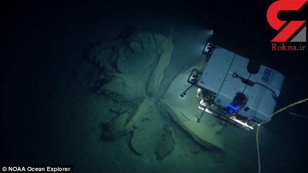 کشف گل غول آسا در اعماق اقیانوس