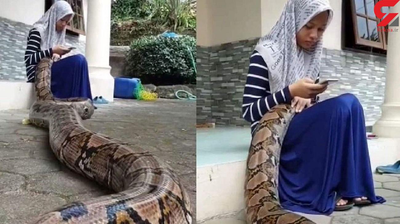 شجاعت دختر مسلمان در مواجهه با مار دیدن دارد + فیلم
