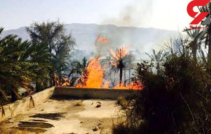 50 هکتار از باغ های میناب هرمزگان در آتش سوخت