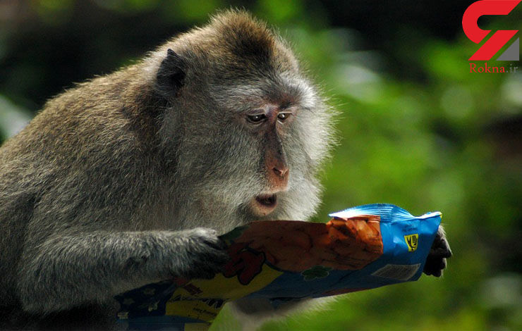 میمون شگفتزده