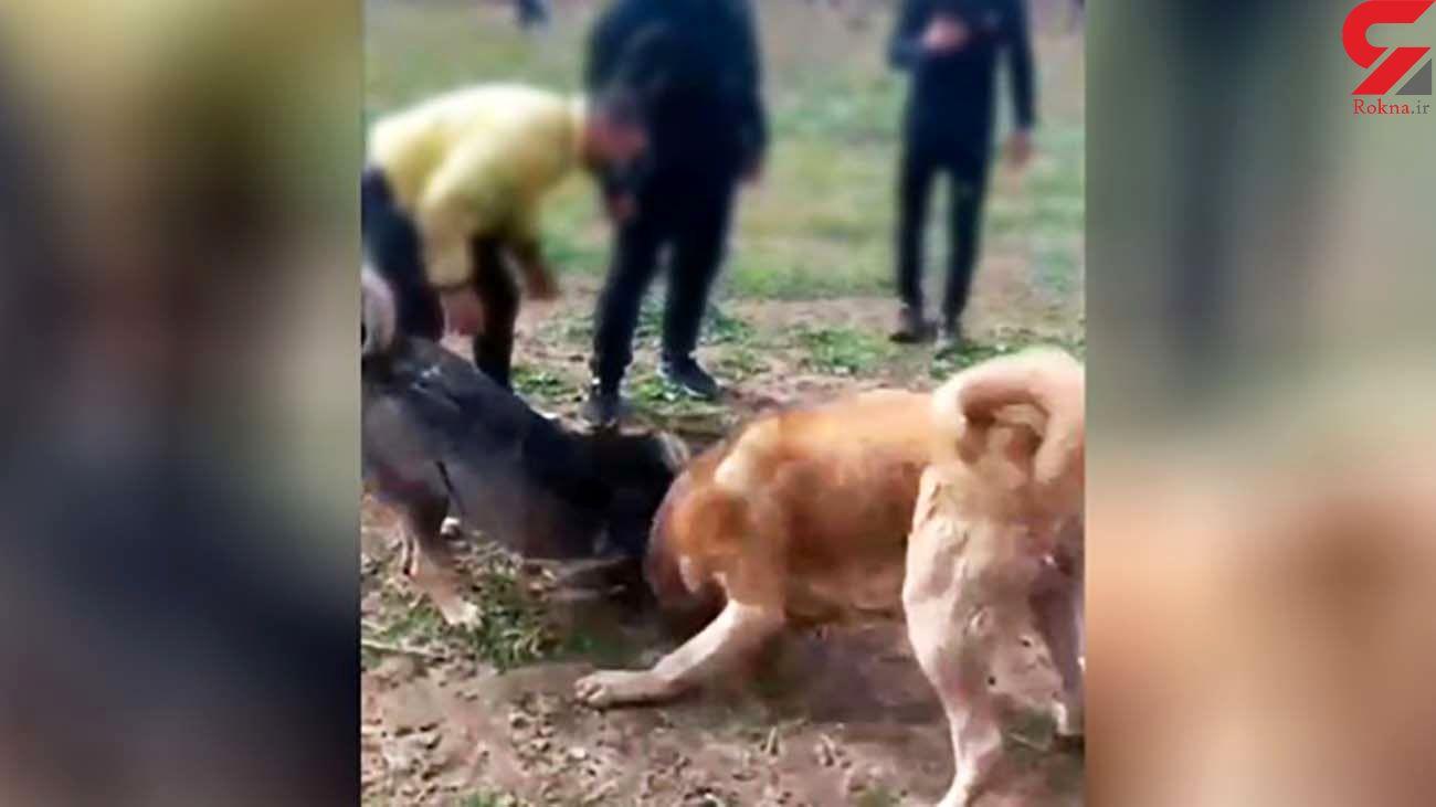 بازداشت برگزارکنندگان مسابقات مبارزه حیوانات دست آموز در ایران