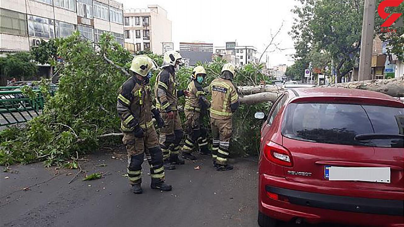 عکس های سقوط درخت در خیابان دماوند/ روز گذشته رخ داد