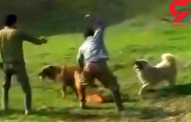 بازداشت مرد سگ کش در بیله سوار اردبیل (فیلم غیرقابل انتشار)