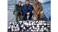قتل عام 100 طوطی دریایی به خاطر 3000 پوند+عکس