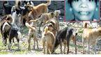 سگهای وحشی زنی را زنده زنده خوردند + عکس
