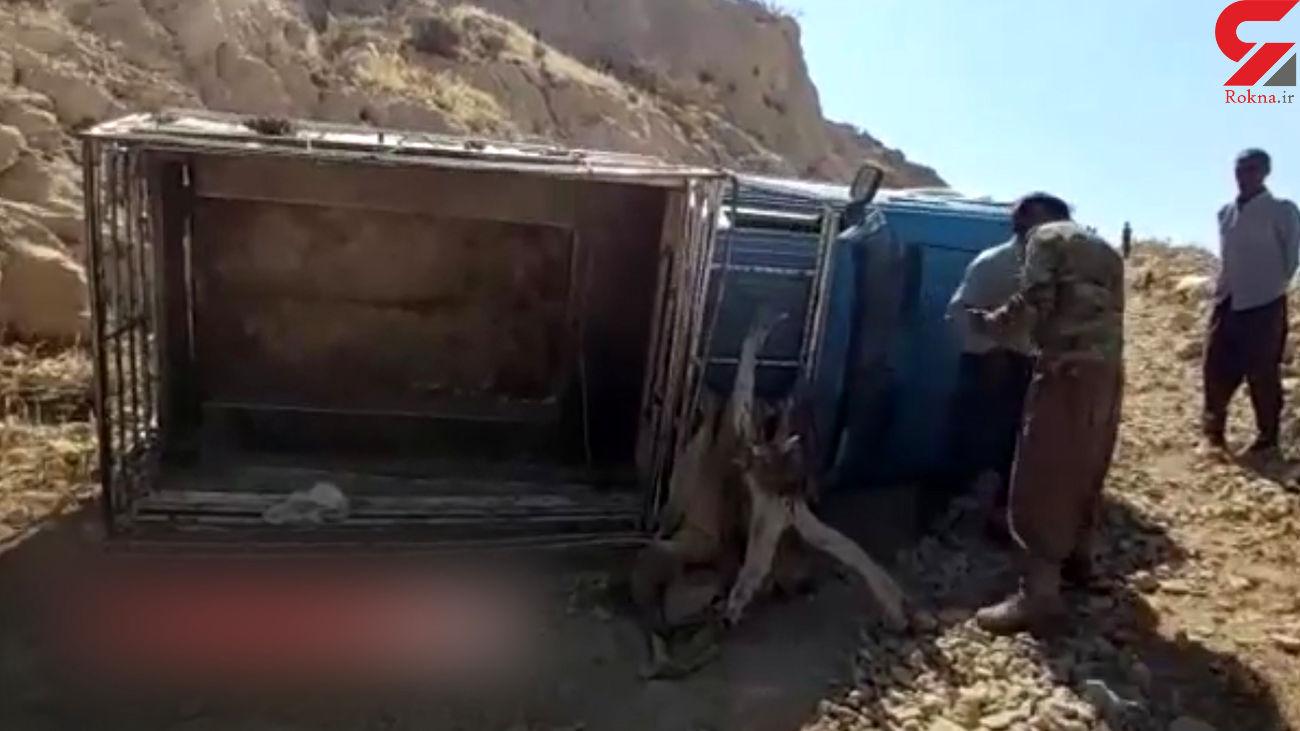 فیلم واژگونی وانت با 27 زن و مرد و کودک در دیشموک