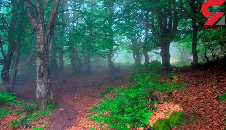راز مخوف در سرزمین درختان درهم تنیده+عکس