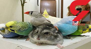 دوستی سگ شکاری با پرندگان خانگی