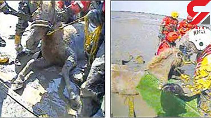 نجات دو سوارکار در ساحل بریتانیا
