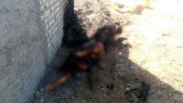 انتشار عکس وحشتناک جسد سوخته در جنوب تهران / راز این جسد چیست / 16+