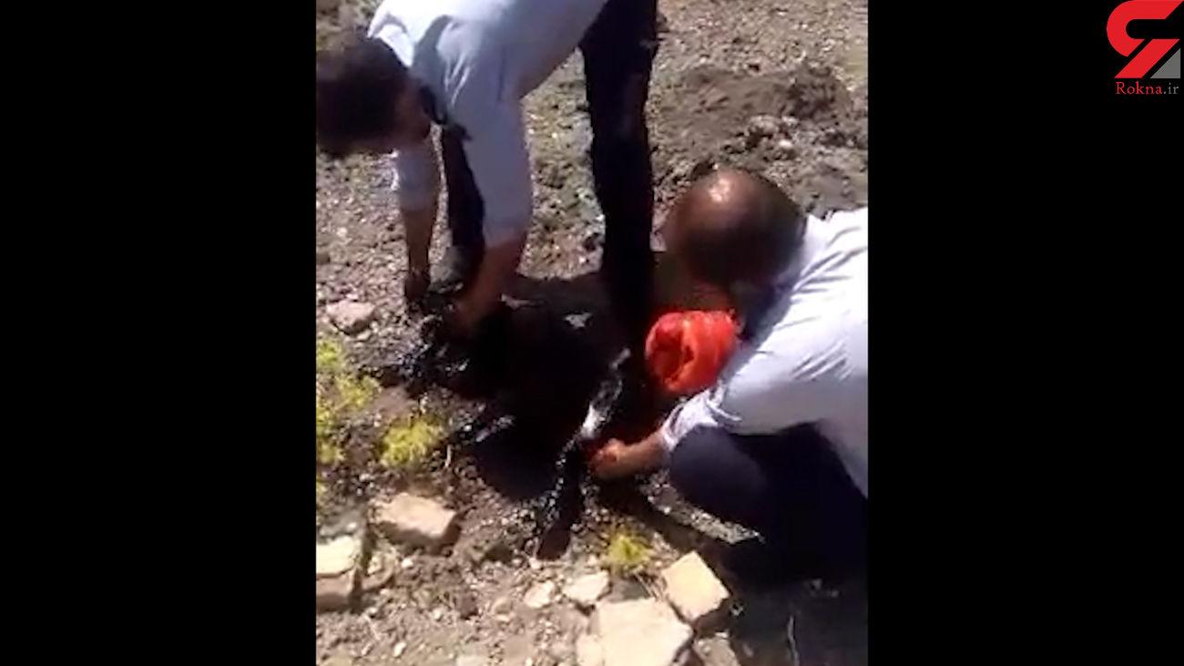فیلم لحظه نجات دادن سگ غرق شده در قیر / آتش نشانان وارد عمل شدند + عکس