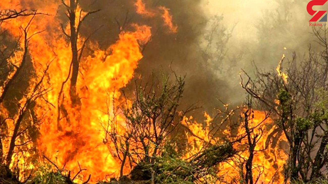عامل انسانی علت اصلی آتش سوزی های البرز