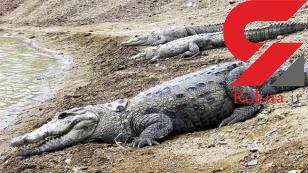 ترسناک ترین و مقدس ترین حیوان ایران + عکس