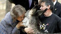 ملکه اسپانیا یک الاغ را بوسید ! + عکس