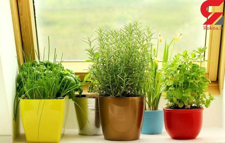 سرحال کردن گیاهان پژمرده