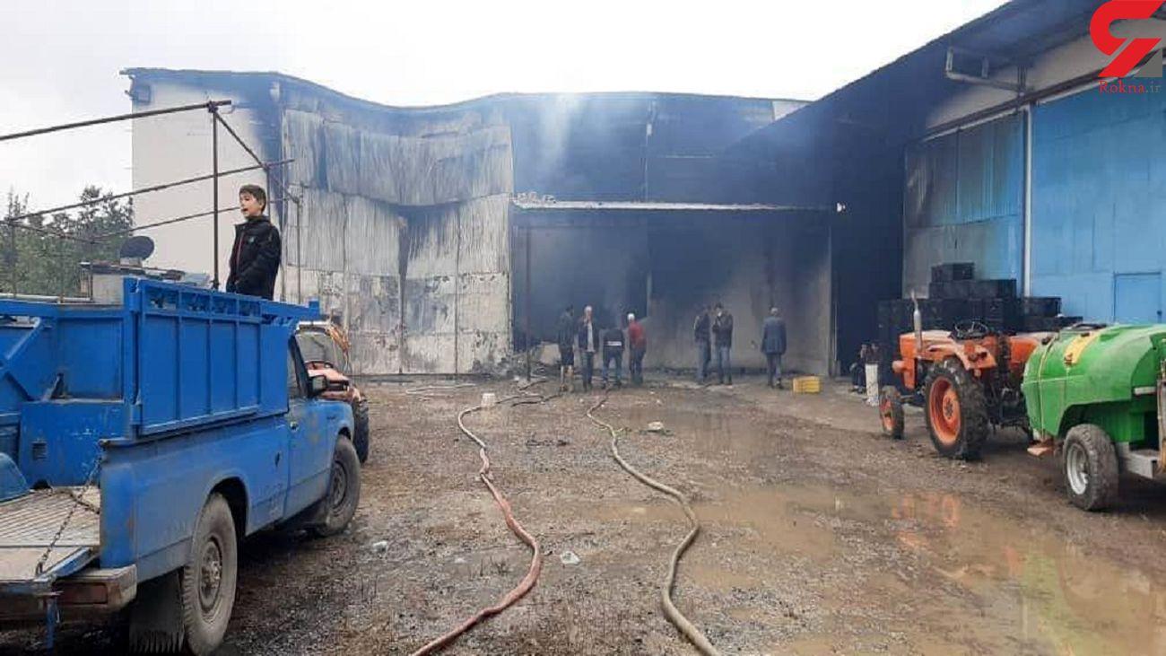 آتش سوزی هولناک در یک واحد سورتینگ میوه در قائم شهر