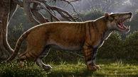 کشف فسیل ۲۰ میلیون ساله یک درنده بزرگ در موزه نایروبی