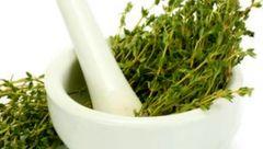 نابودی بیماری های کبدی با یک گیاه خوشبو