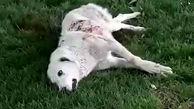 بازداشت عامل انتشار فیلم سگ آزاری در بندر انزلی