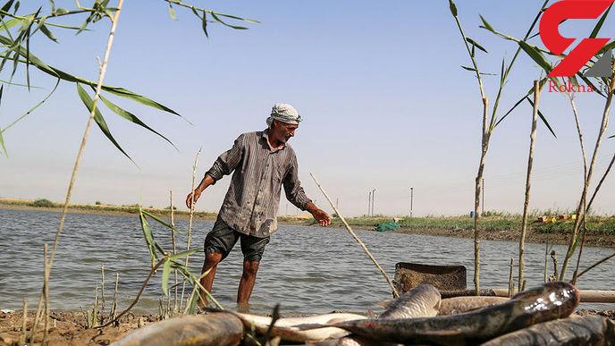 مرگ ماهیان در خرمشهر