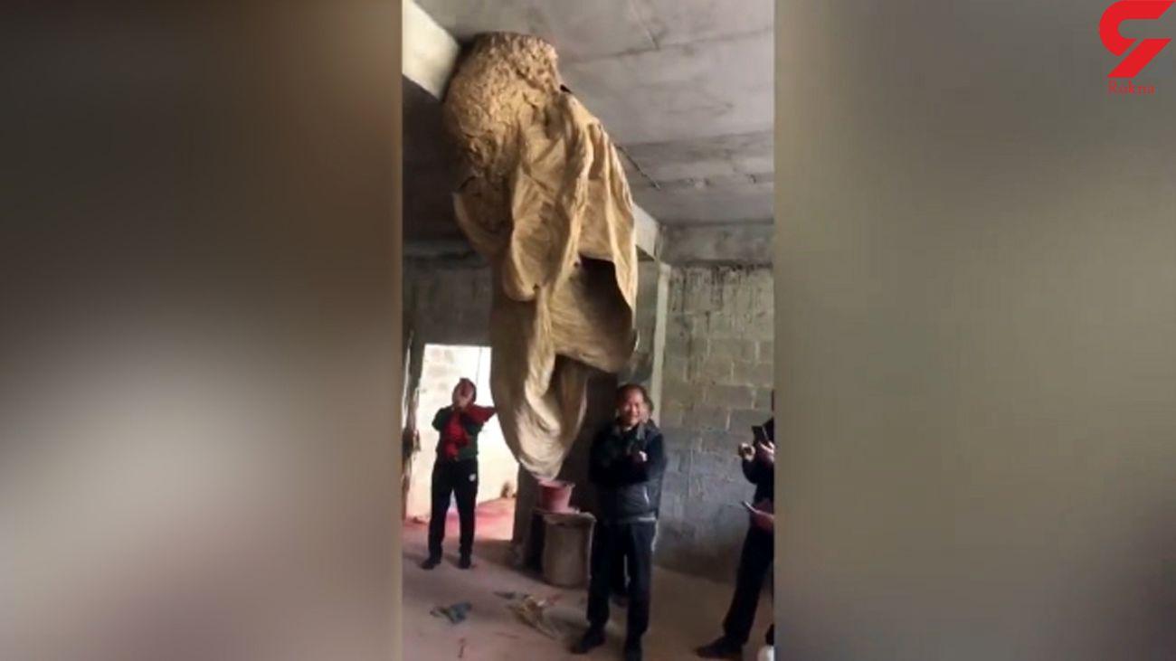 فیلم کندوی دو متری زنبور ها در یک ساختمان!