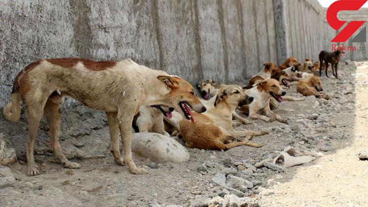 حمله سگ های ولگرد به 6 تهرانی / 2 سگ هم به هاری مبتلا بودند