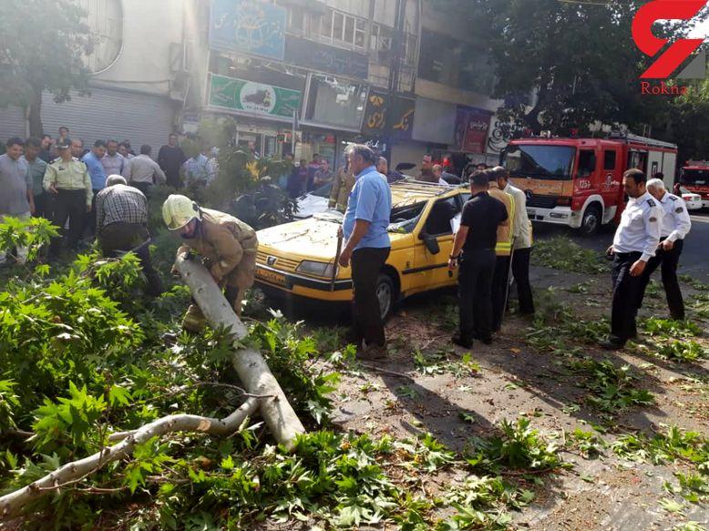 سقوط درخت غول پیکر در تهران / 3 خودروی در این حادثه له شدند+ عکس