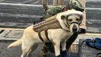 این سگ زنده یاب، قهرمان ملی مکزیک پس از زلزله شد + عکس