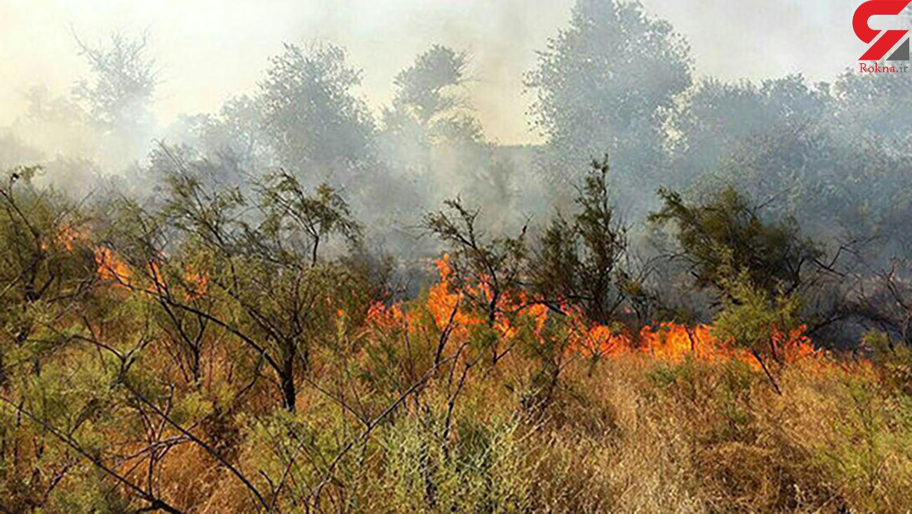 مهار آتش سوزی مناطق جنگلی سردشت