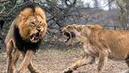 کتک خوردن سلطان از همسرش! + عکس