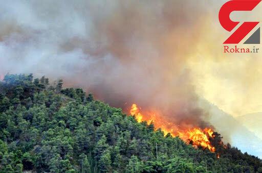 حادثه ای هولناک در جنگل های تالش / آتش همه جا را فرا گرفت