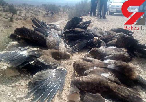 مقصر مرگ عقابها کیست ؟! / مردم یا مسئولان؟ + عکس