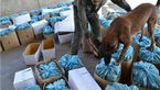 2 کیلو تریاک از بسته های پستی گمرک فرودگاه امام خمینی(ره) کشف شد