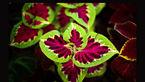 گل های زینتی، علت رواج مسمومیت های گیاهی