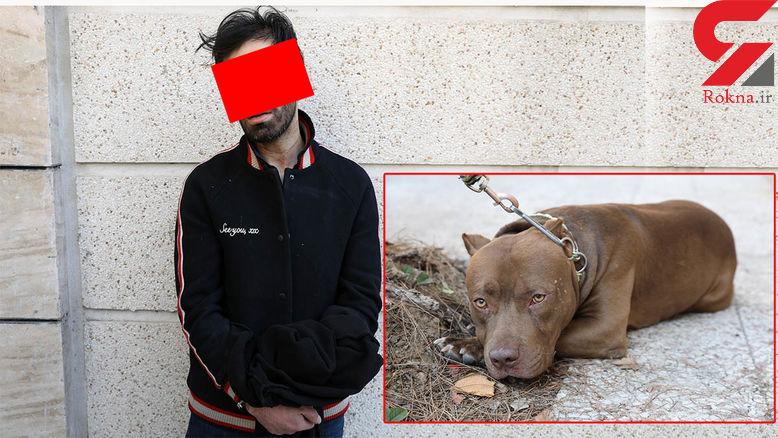 جزئیات حمله سگ پیت بول به 2 مرد در شمال تهران / صاحب سگ دستگیر شد + عکس و فیلم گفتگو