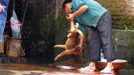گوشت سگ  برای غذای اعیانی / زنده زنده کشتن سگ ها در مقابل مردم + عکس