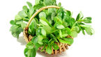 این سبزی 99 بیماری را درمان می کند