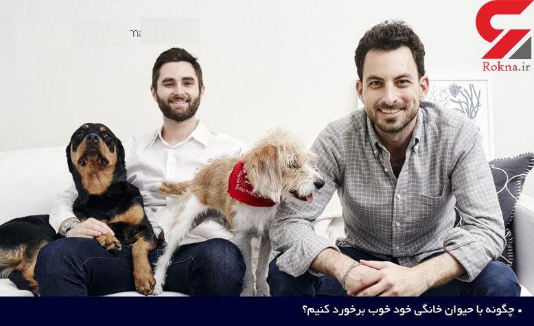 راهکارهای مهم برای برخورد مناسب با حیوان خانگی خود +تصاویر