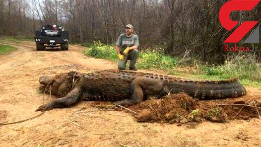 تمساح 320 کیلویی غول پیکر و ترسناک + عکس