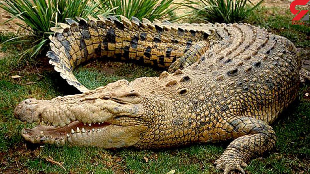 10 حقیقت جالب درباره تمساح ها + عکس